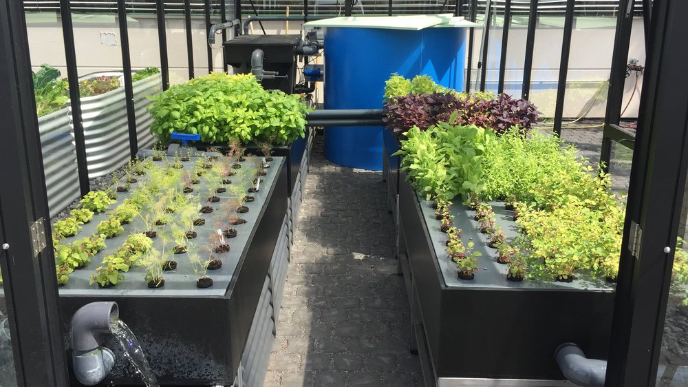 The Hydroculture - The four Growbeds for around 200 plants are based on stainless steel tables with Rafts for 8cm and 5 cm Meshpots. The two sumptanks are splittable to disconnect hydro- and aquaculture if neccesary. The clean surface allow a dirt-free handling of plants.