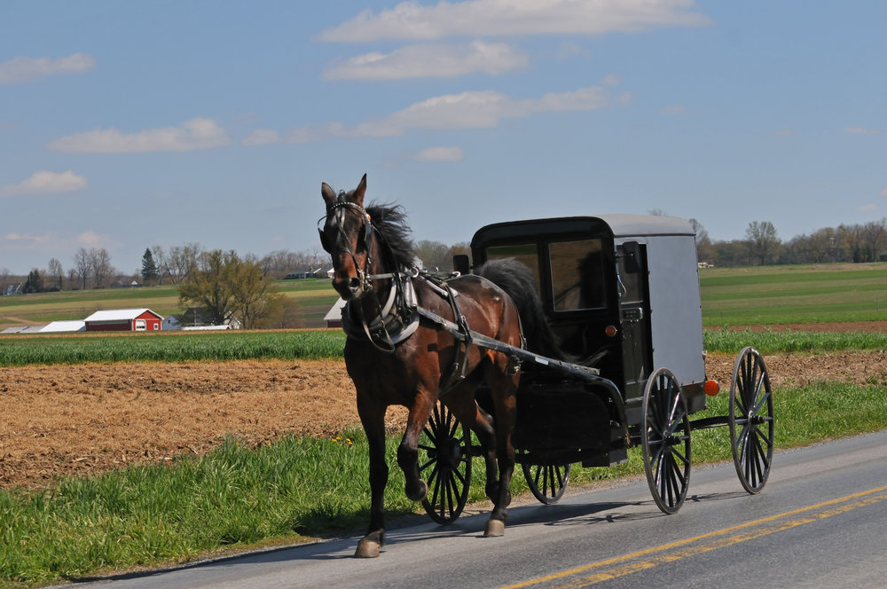 Horse and Buggy Delano