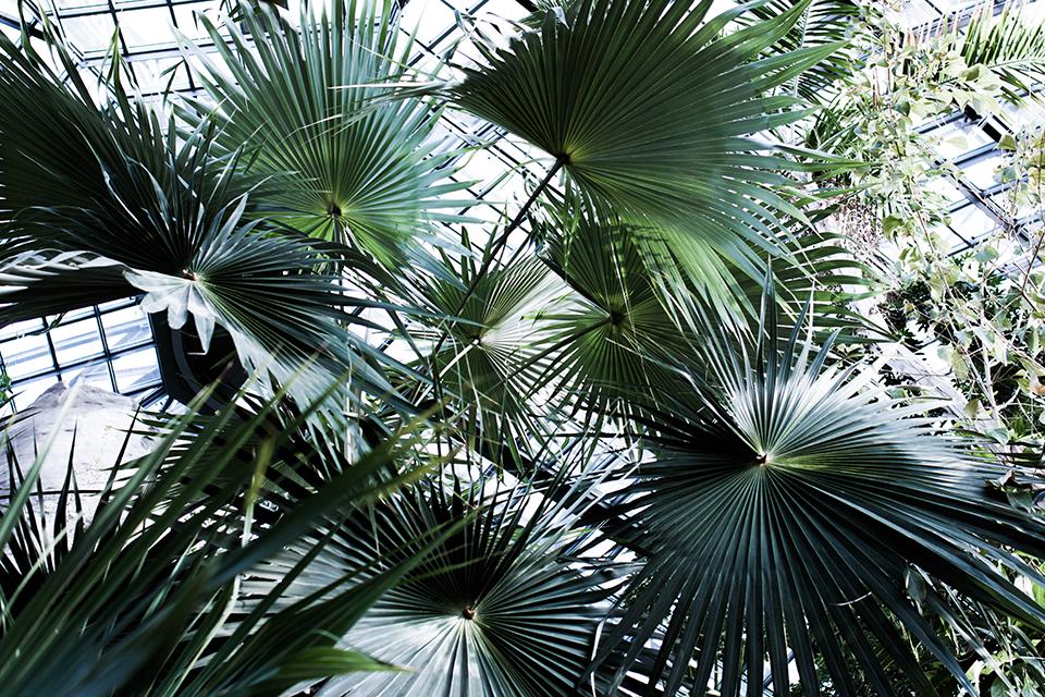 noa-noir-art-berlin-botanic-garden-cactus-tropical-green-botanischer-garten-1.png
