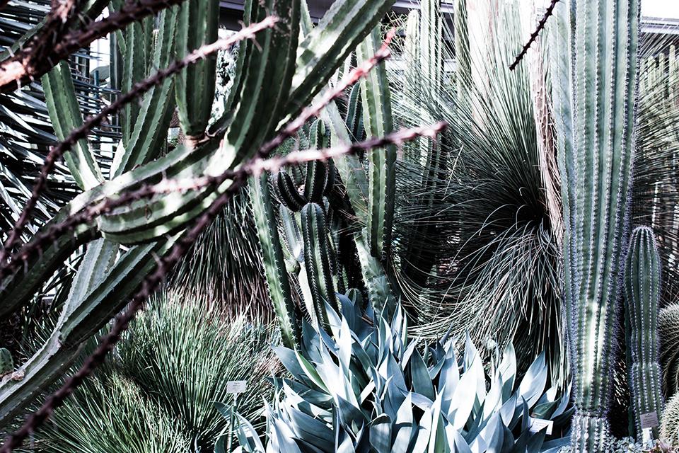 noa-noir-art-berlin-botanic-garden-cactus-tropical-green-botanischer-garten-3.png