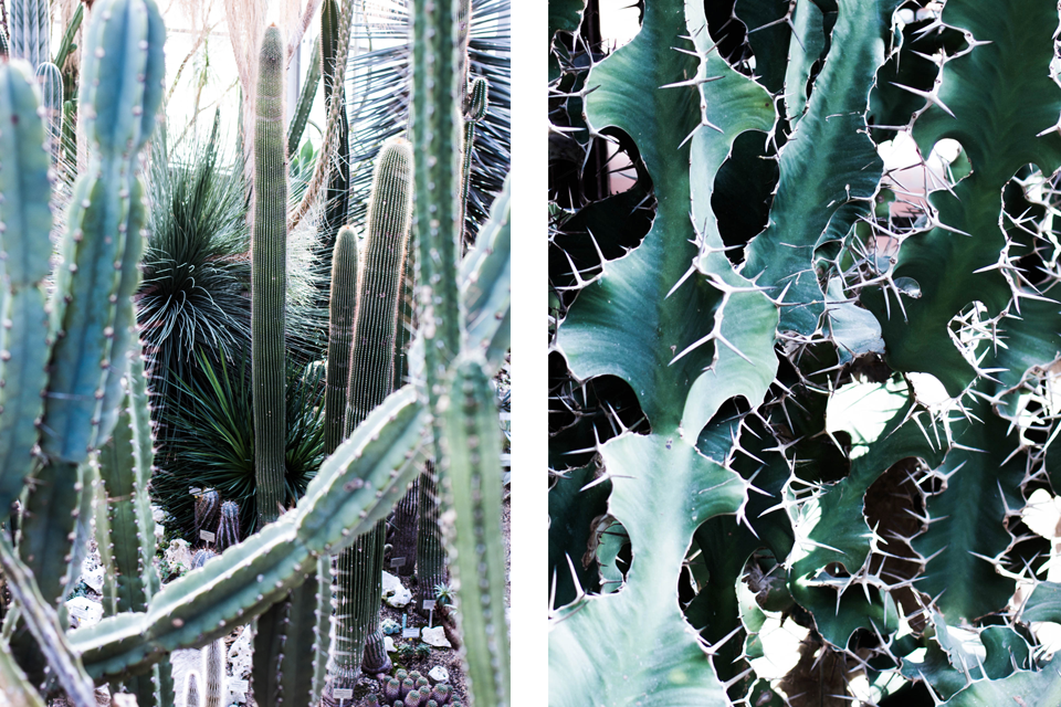 noa-noir-art-berlin-botanic-garden-cactus-tropical-green-botanischer-garten-4-1.png