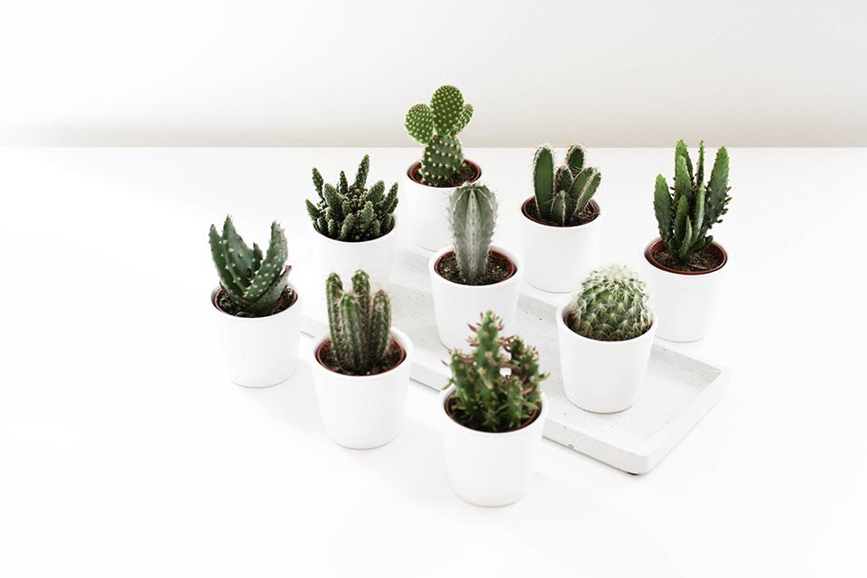 noa-noir-art-interior-home-decor-cactus-cacti-succulents-green-mini-plants-minimalistic-1.jpg