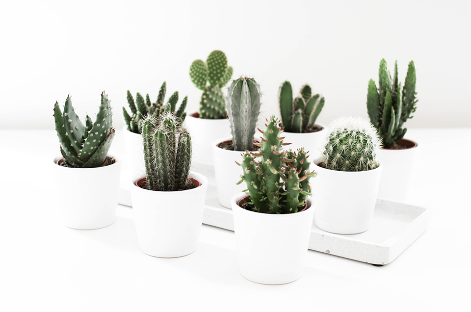 noa-noir-art-interior-home-decor-cactus-cacti-succulents-green-mini-plants-minimalistic-2.jpg
