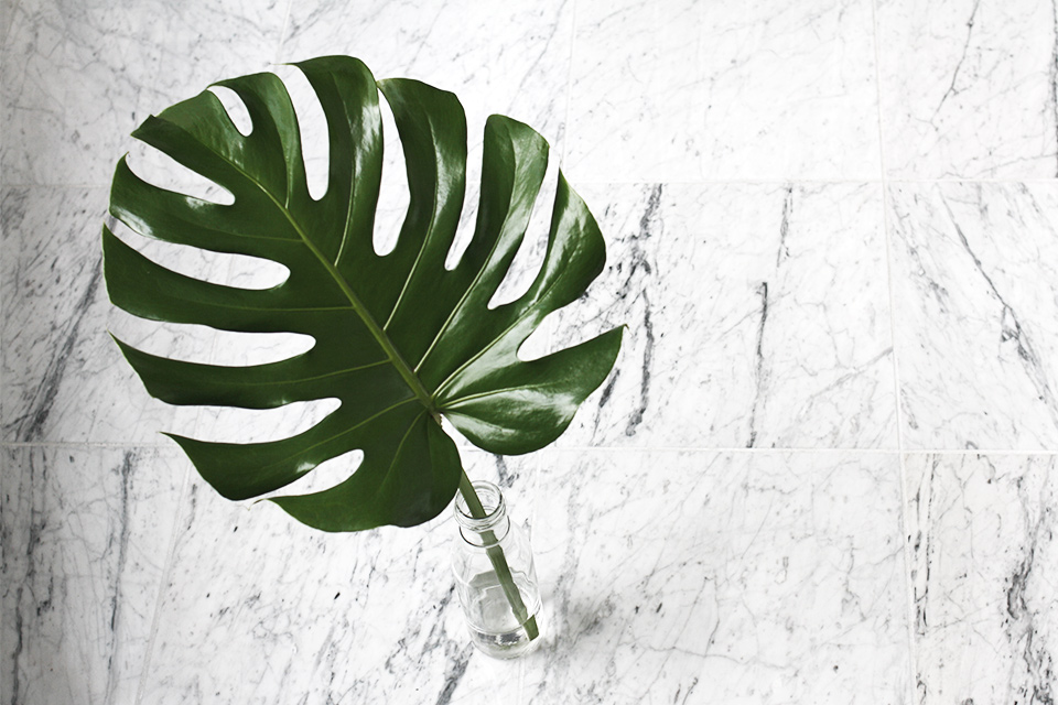 noa-noir-art-interior-home-decor-plants-monstera-deliciosa-decoration-ideas-marble-1.jpg