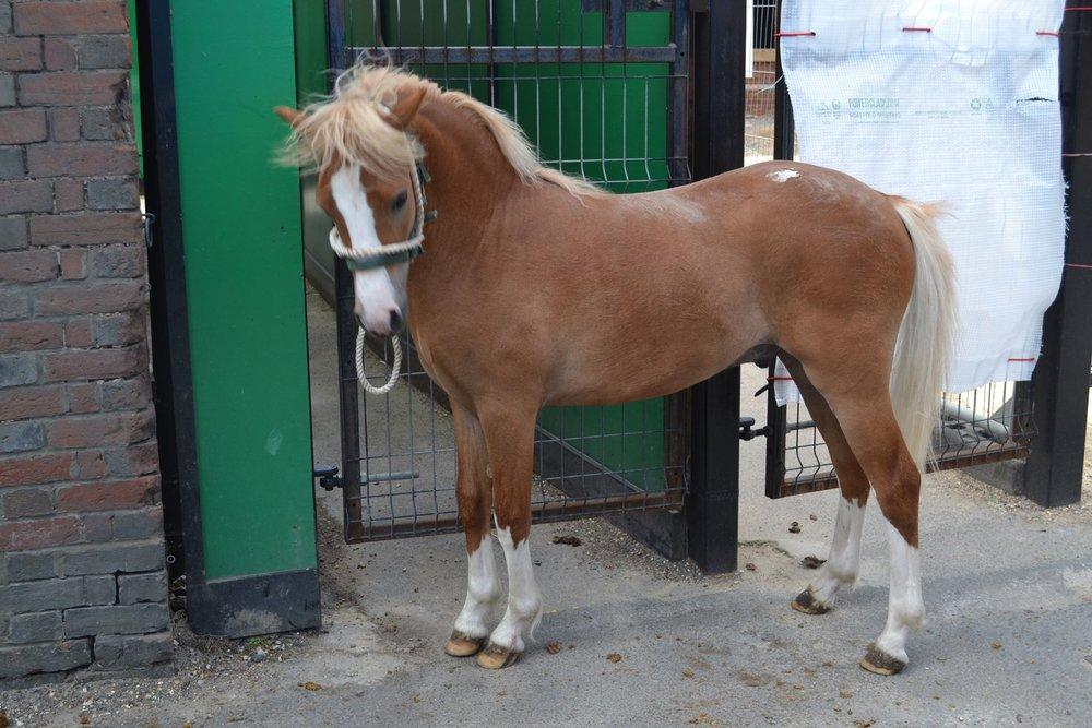 Pony (posing)