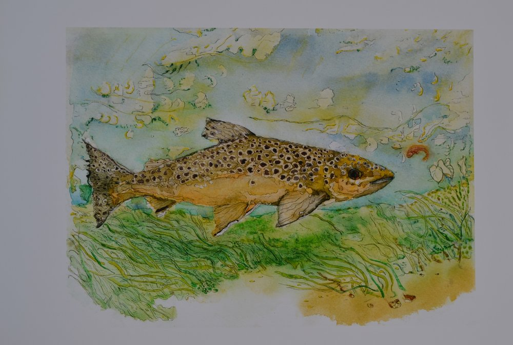 Brown Trout by Sarah Keen