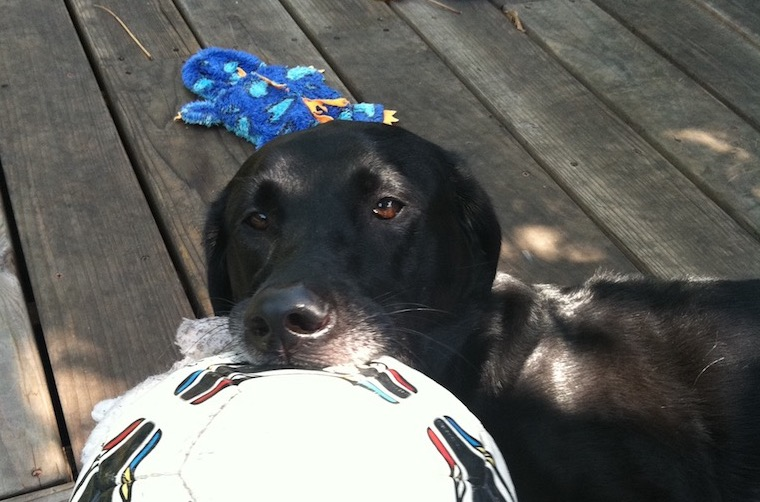 black dog with ball_med.jpg