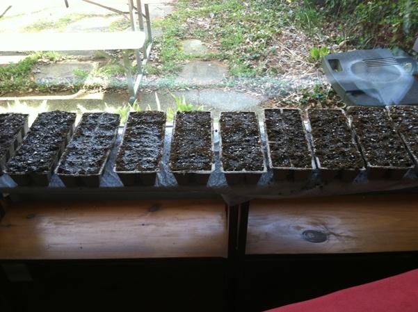 my makeshift greenhouse
