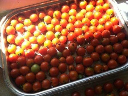 cherry tomatoes 2 - Copy.JPG
