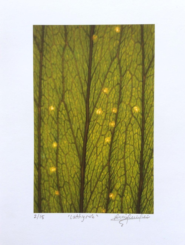 leaf-print.jpg