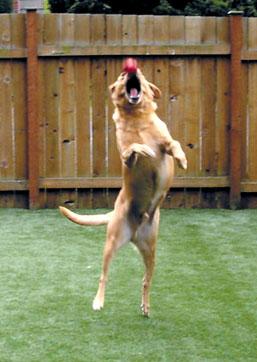 dog_jumping.jpg