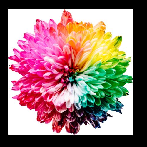 Chakra_Flower.png