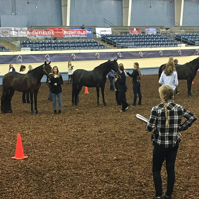Our Morgan, Camille, helped with the judging workshop in October at MGN!