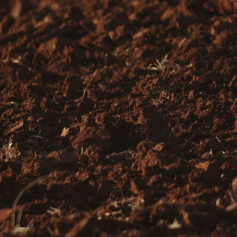 GARDEN LAWN/SOIL -