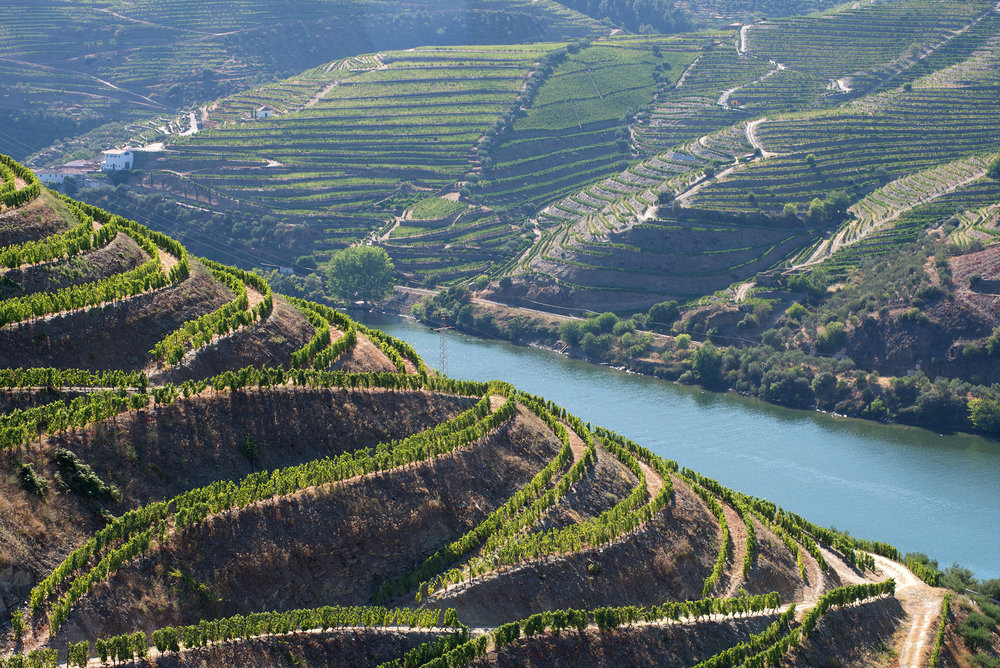One of Txikiteo's favourite wineries Finca Volvoreta from absolute rockstar wine-maker Maria Alfonso can be found along the banks of the Douro river, in Northern Portugal.
