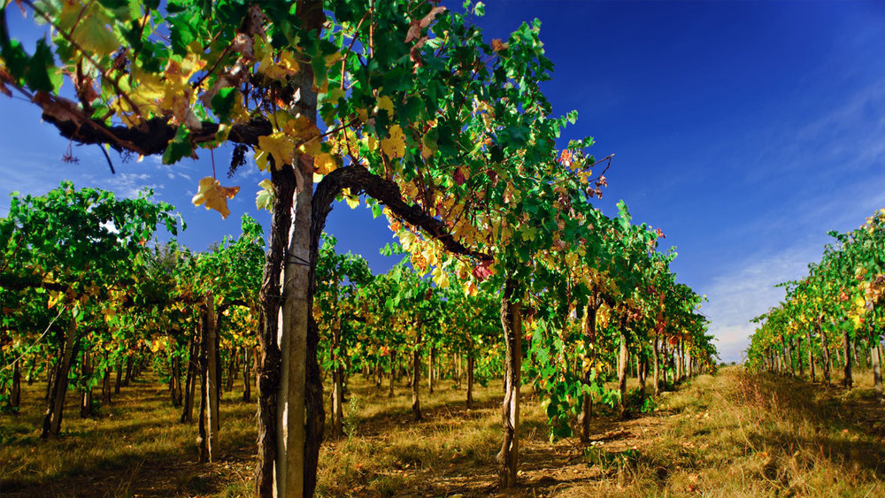 wine doc 3.jpg