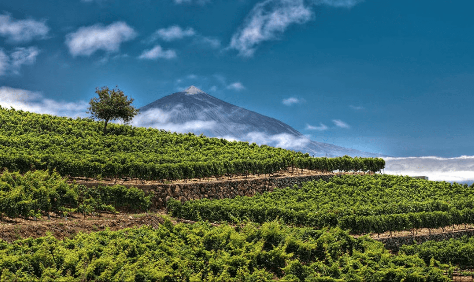 """The unique volcanic landscape of the largest canary island, Tenerife. The vineyards are planted """"wild"""" on cliffs just above the Atlantic Ocean, and under the shadow of Mount Teide."""