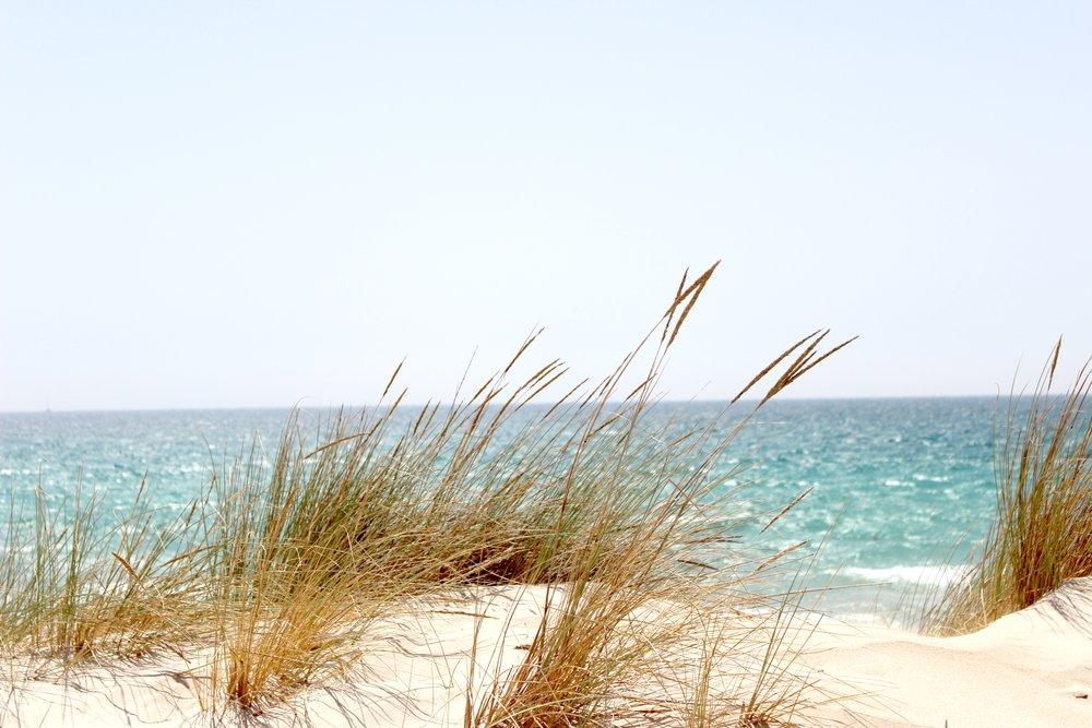 beach-dawn-dune-662994 (1).jpg