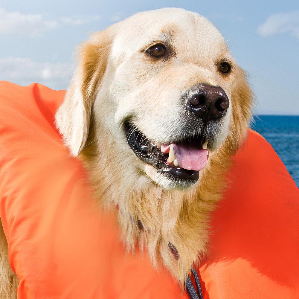 life jacket dog