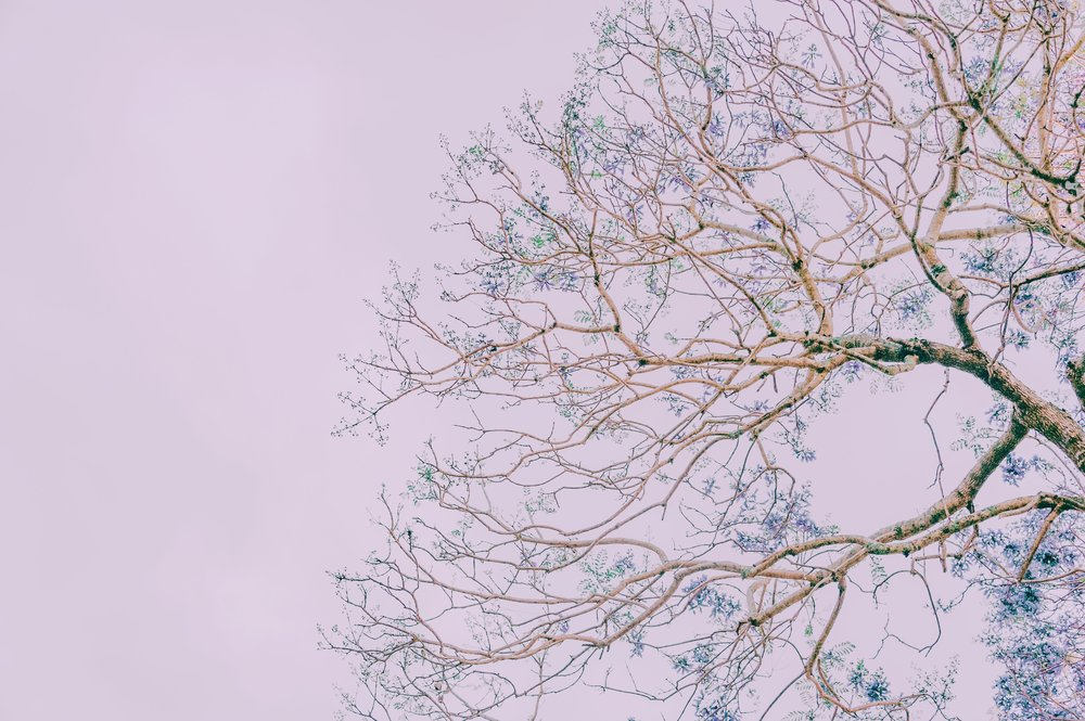branches-desktop-backgrounds-free-wallpaper-1406866.jpg