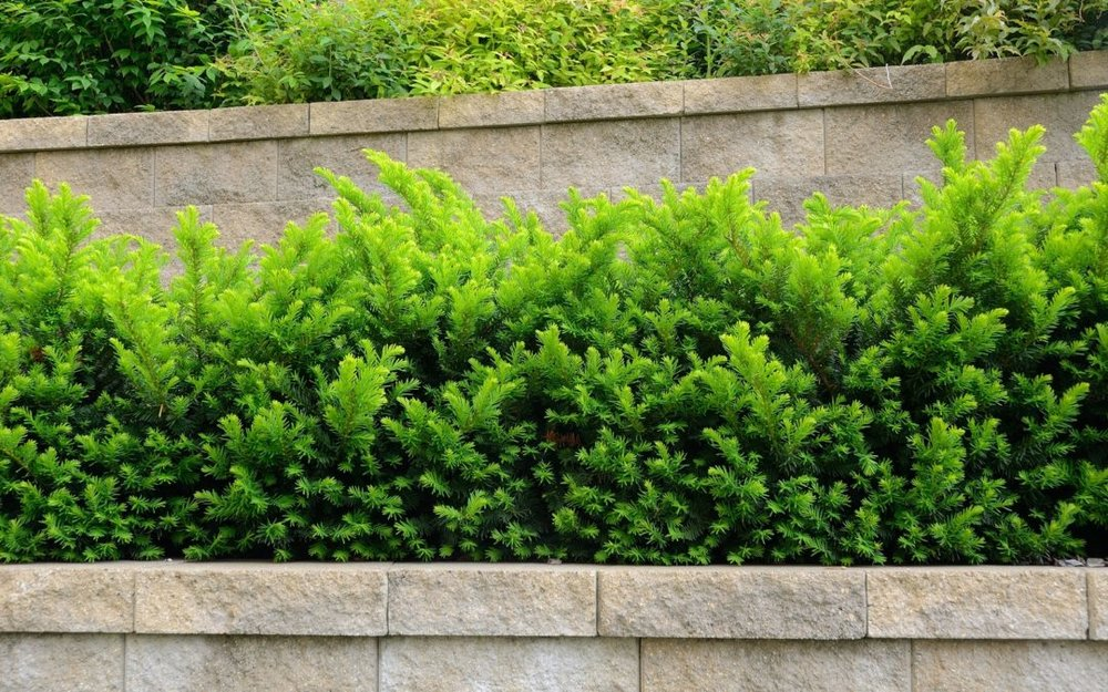 retaining-wall-systems-1080x675.jpg