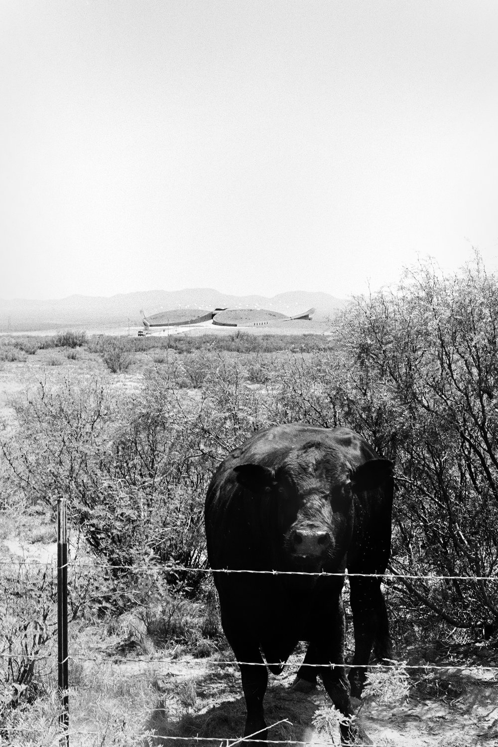 Spaceport America, located, 30 miles east of Truth or Consequences, New Mexico, shares land with a working ranch.  Porter McDonald (35 mm B&W)