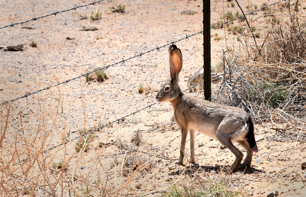Jackrabbit at Spaceport America