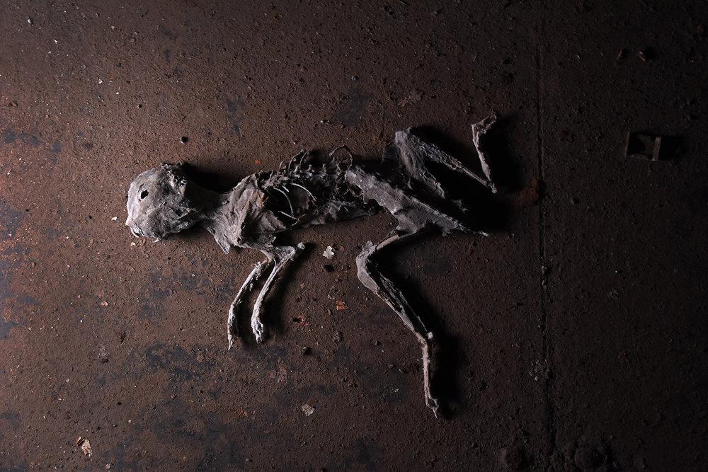 A rabbit skeleton in the control center. © Porter McDonald
