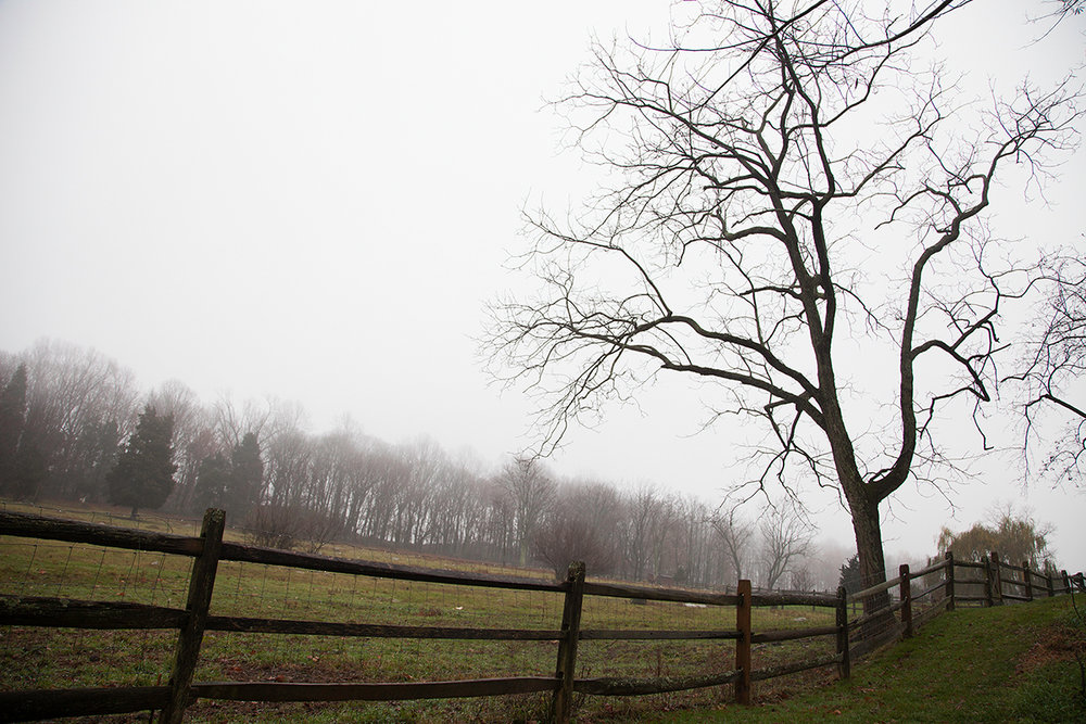 Shannon_Varley_pasture_fence_017.jpg