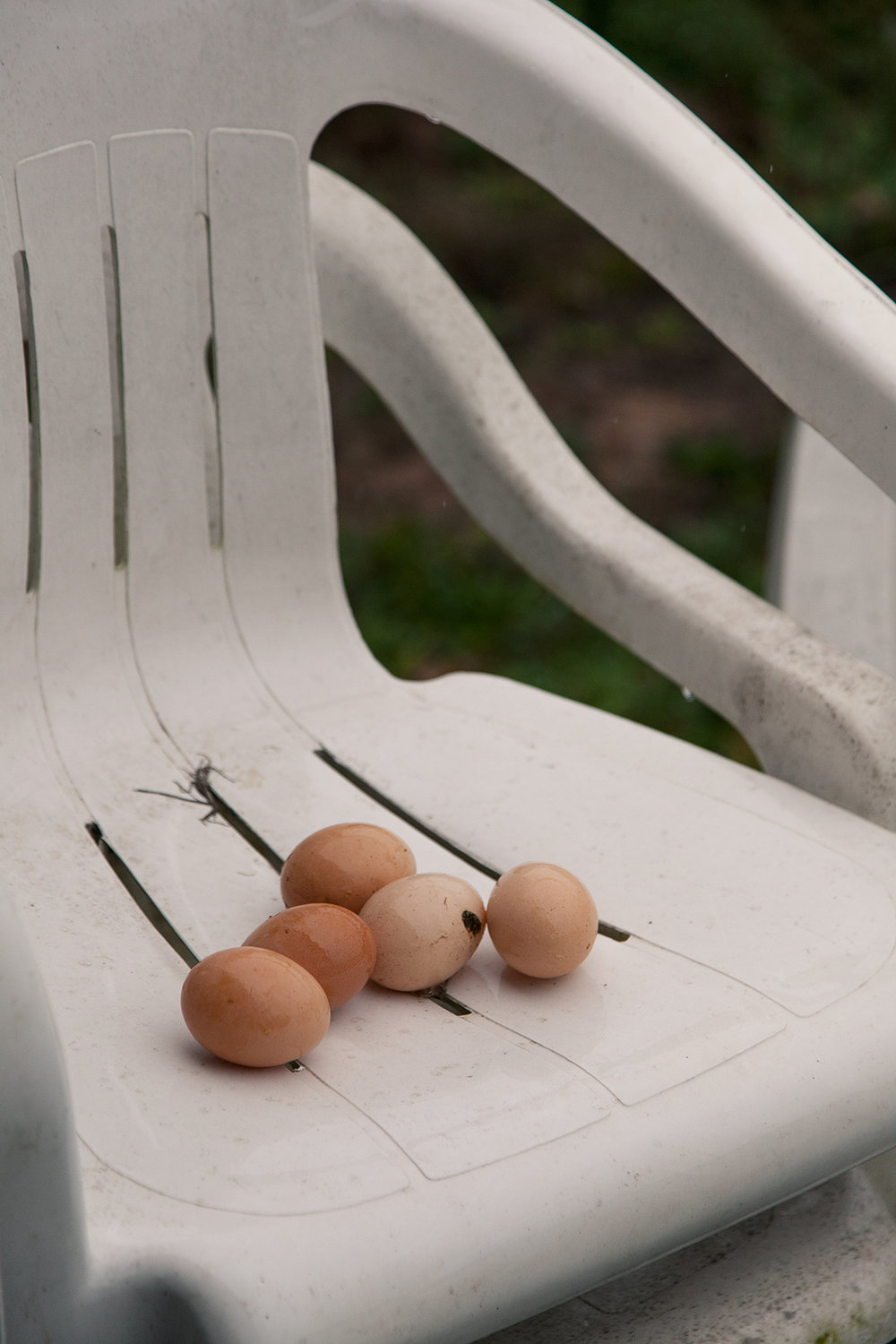 Possum_Tail_Farm_eggs_in_chair_1381.jpg