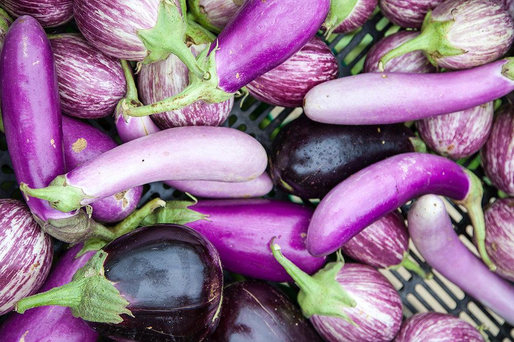 Mo_Moutoux_eggplants_405.jpg