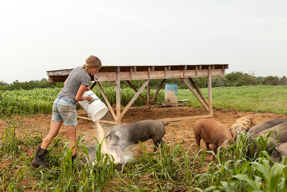 Mo_Moutoux_feeding_pigs_206.jpg