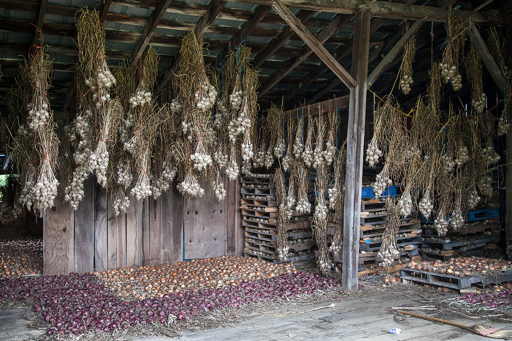 Mo_Moutoux_onions_curing_442.jpg