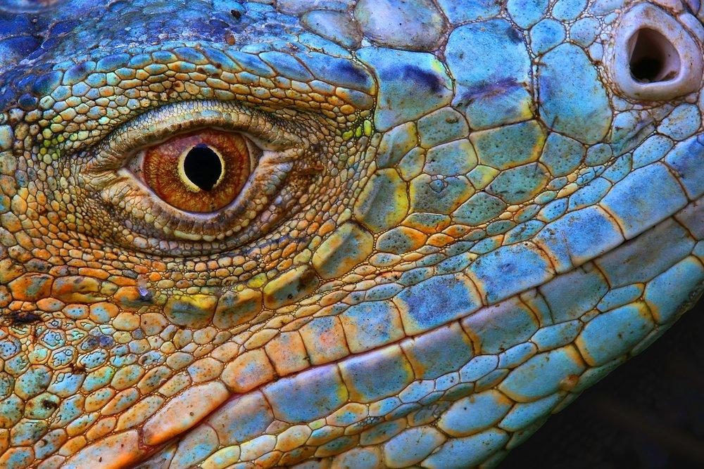 snakeye.jpg