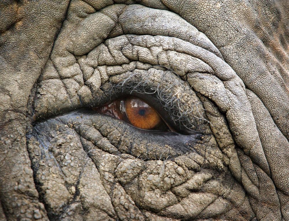 elephanteye.jpg