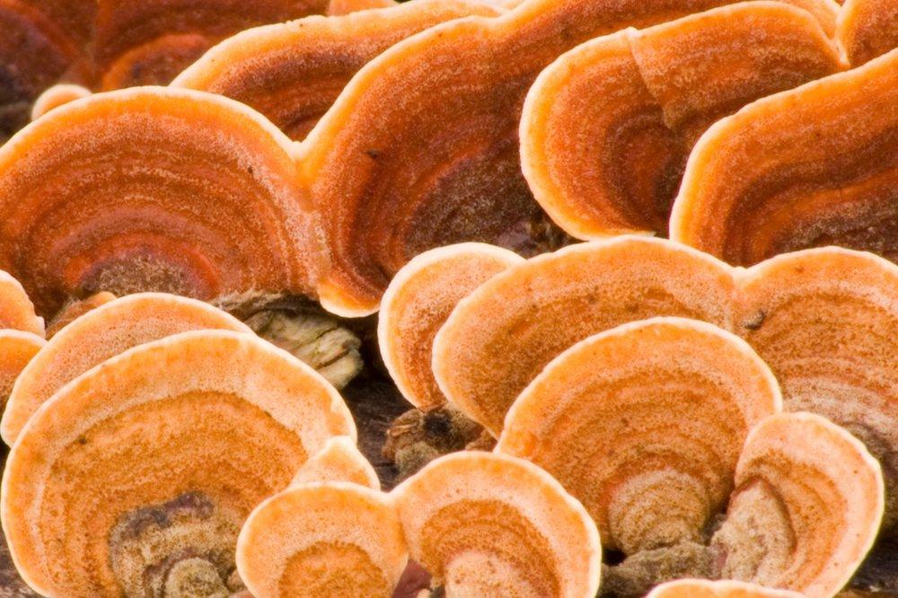 mushroom-crop_orig.jpg