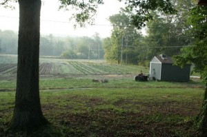 Tant Hill Farms3.jpg