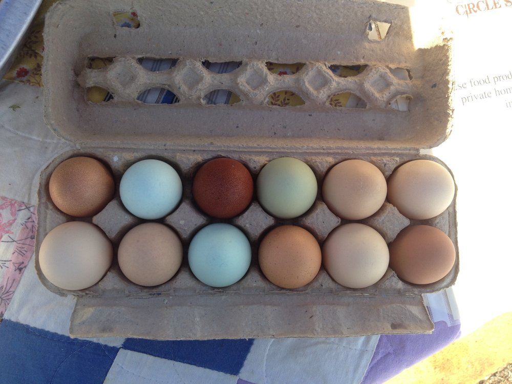 1:29 circle s eggs.JPG