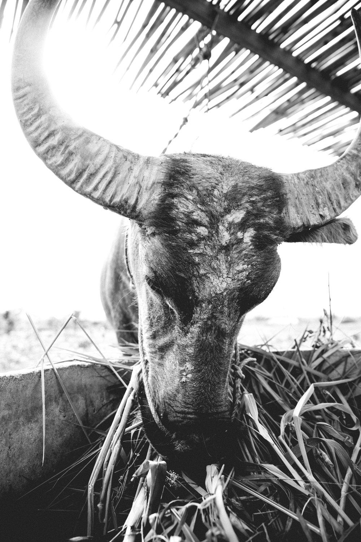 Cambodia-86.jpg