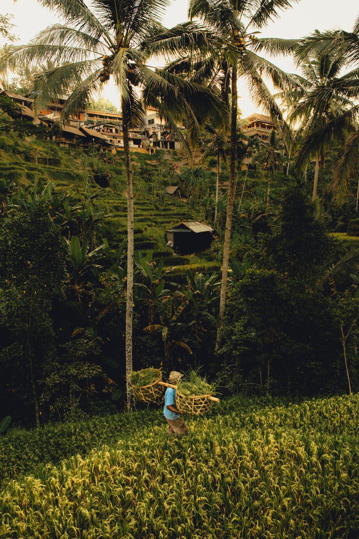 Bali-143.jpg