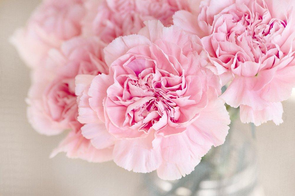 flowers-1325012_1920.jpg