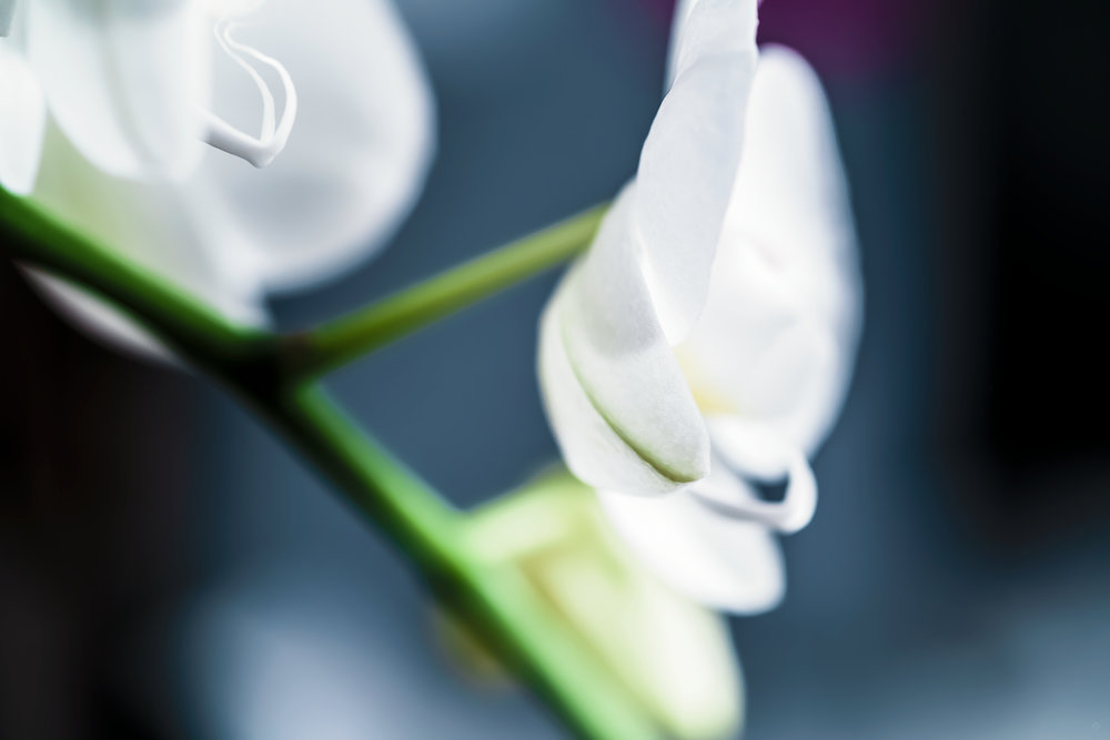 Remembrance -