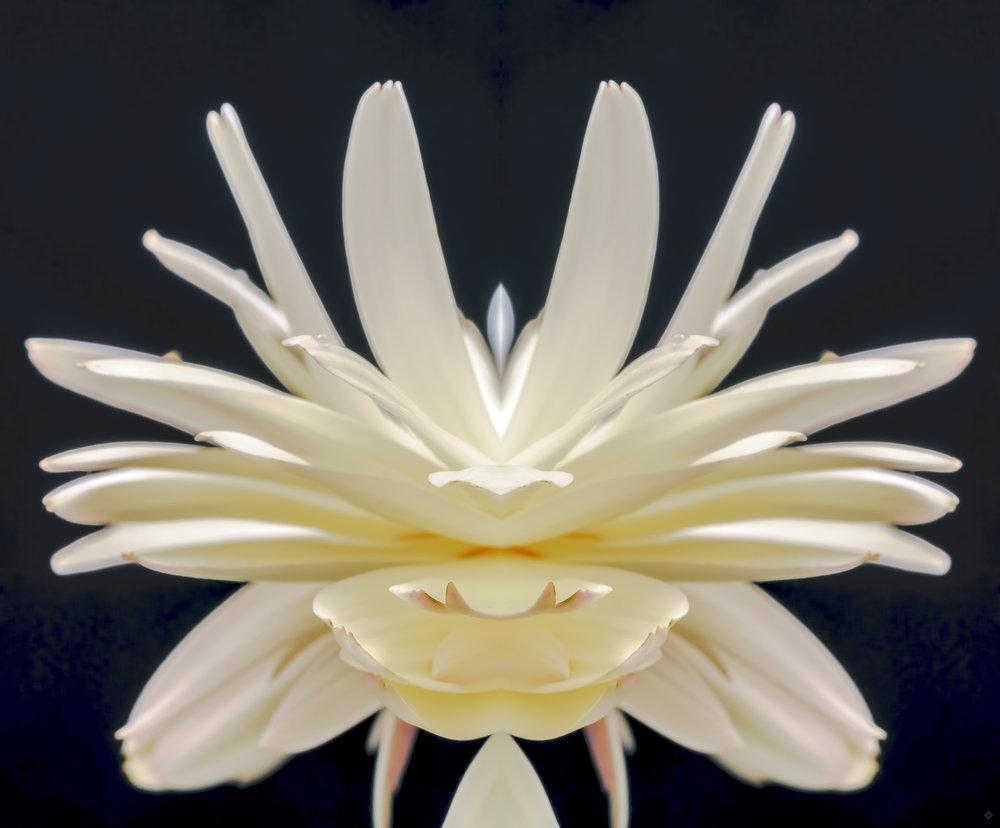 Flora, with a twist -