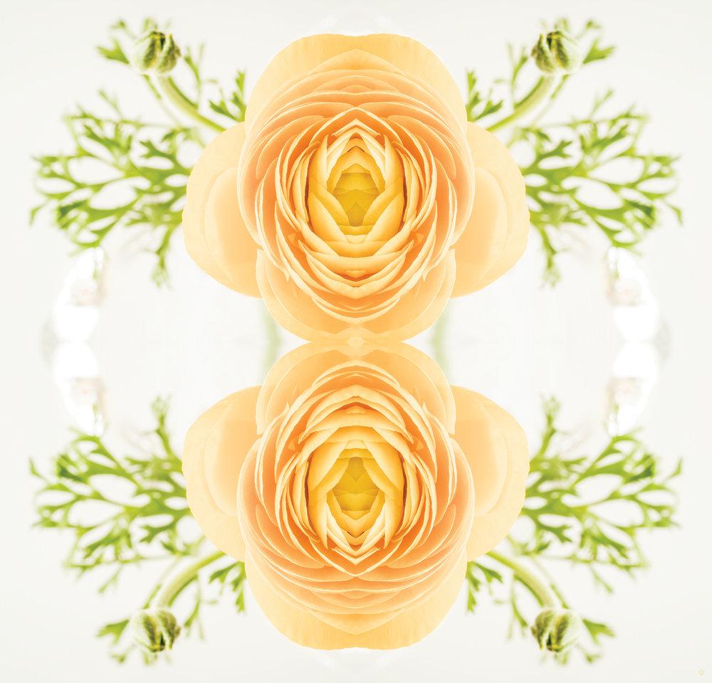 Efflorescence 17