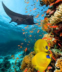 diving_sharm_el_sheikh_360_65ca0_lg.jpg