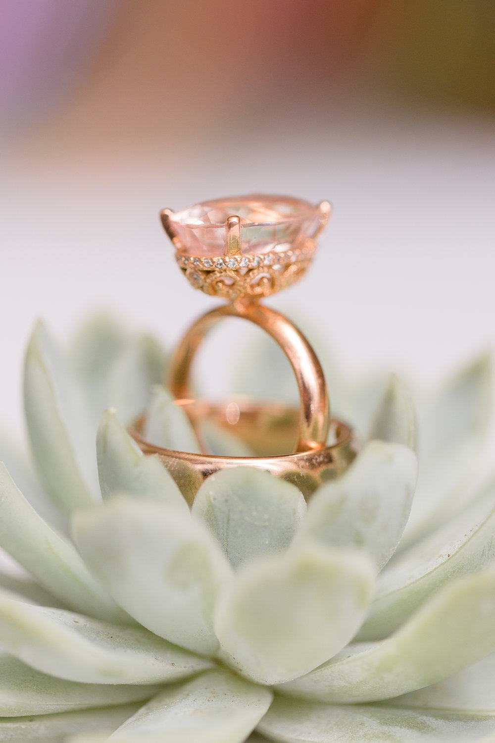 wedding rings in succulent plant