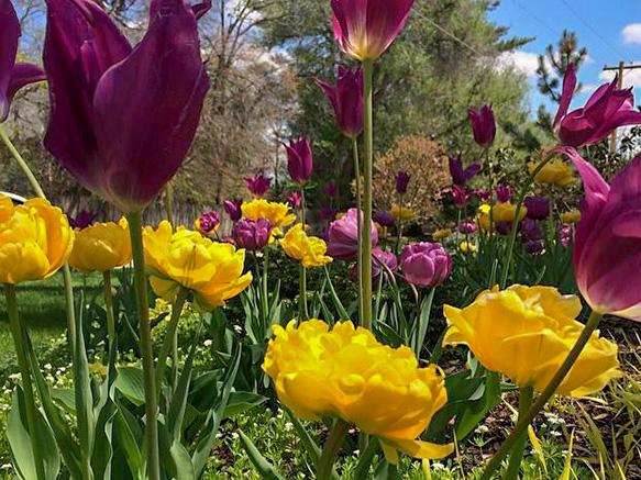 Moye.Spring.jpg