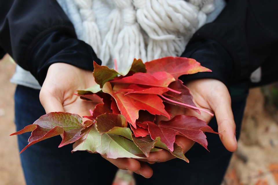 Leaves and hands.