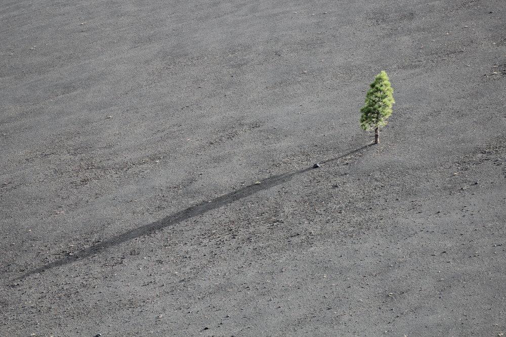 Lone tree on gray plain.