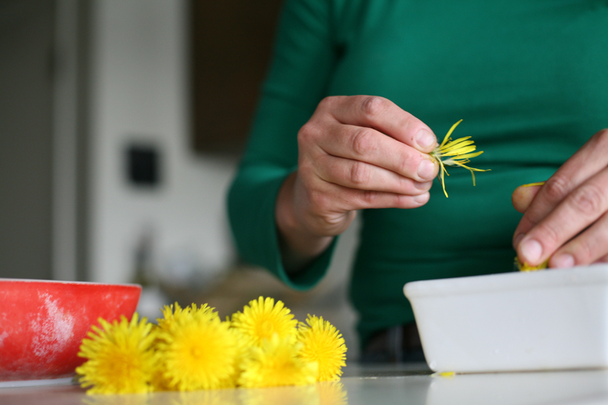How to Harvest & Eat Dandelions
